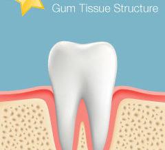 Healthy Gum Tissue Structure